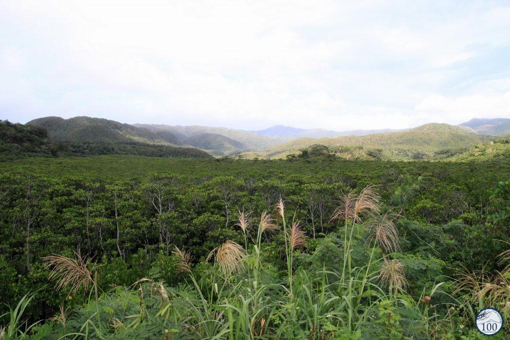 Into the jungle of Iriomote