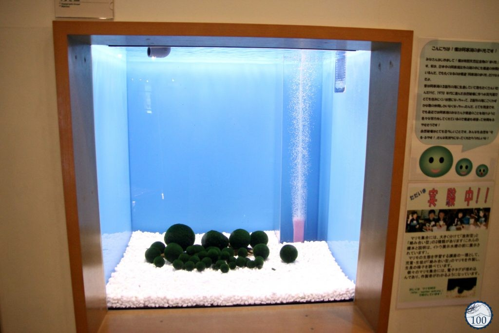 Marimo at Eco museum center