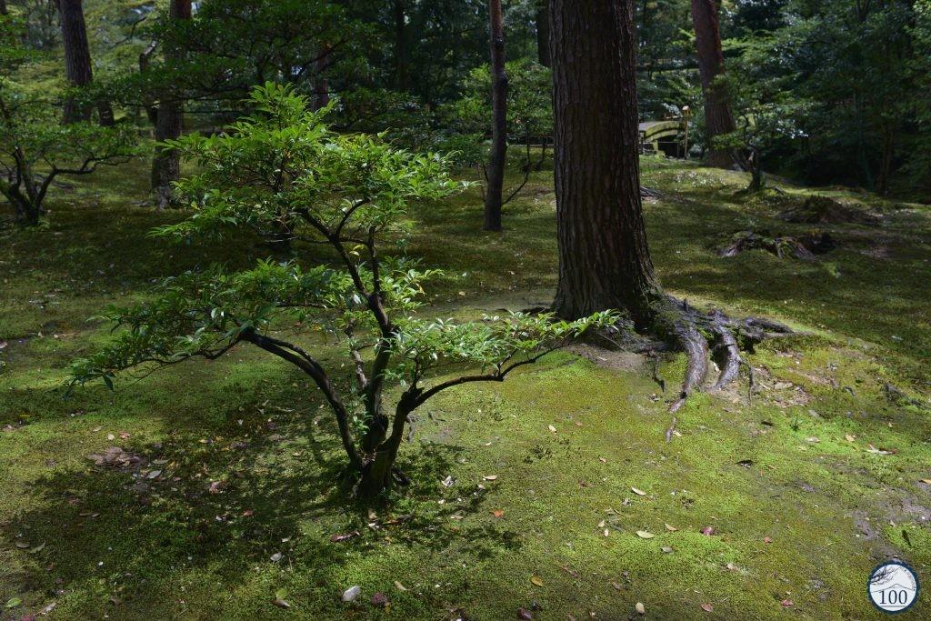 Kanazawa
