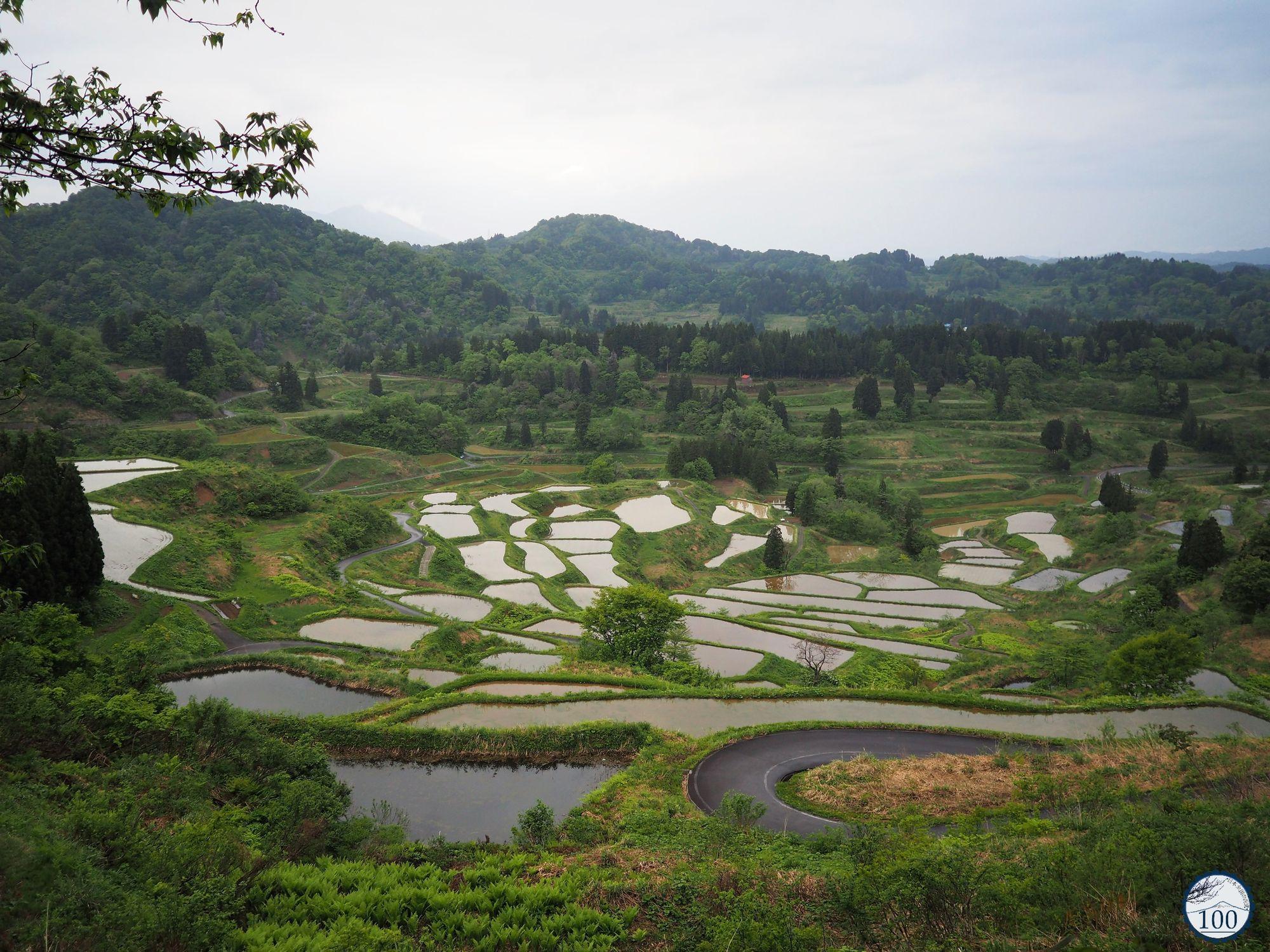 Rizières en terrasses de Niigata