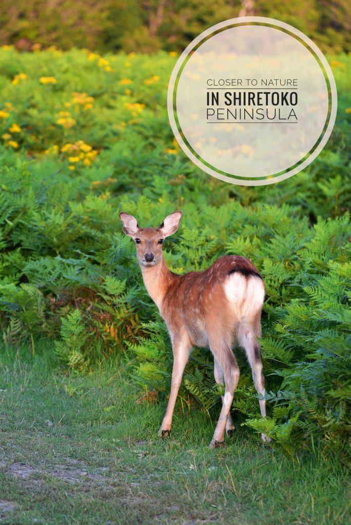 Shiretoko