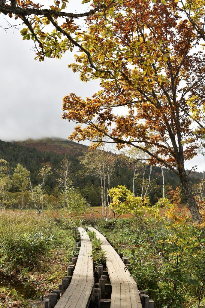 Ozegahara - Gunma