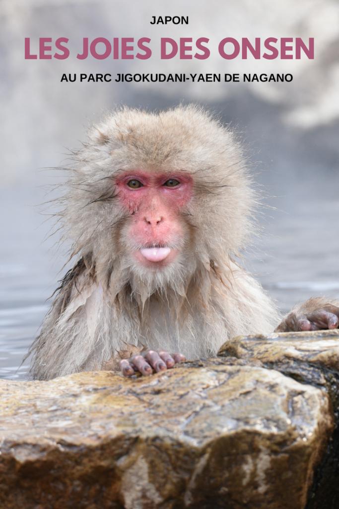 Snow monkey - Jigokudani-Yaen koen