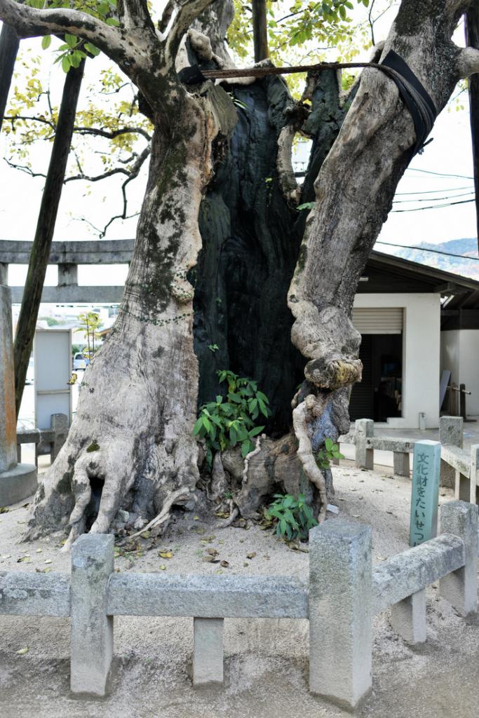 Dazaifu Tenman-gu - Kyushu