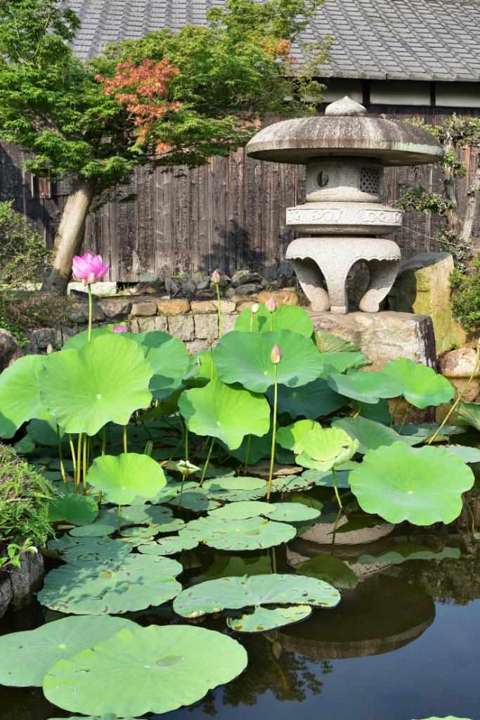 Okayama - jardin japonais