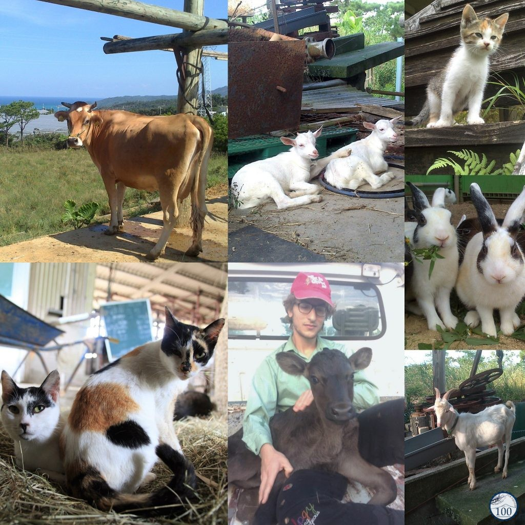 Wwoofing Okinawa